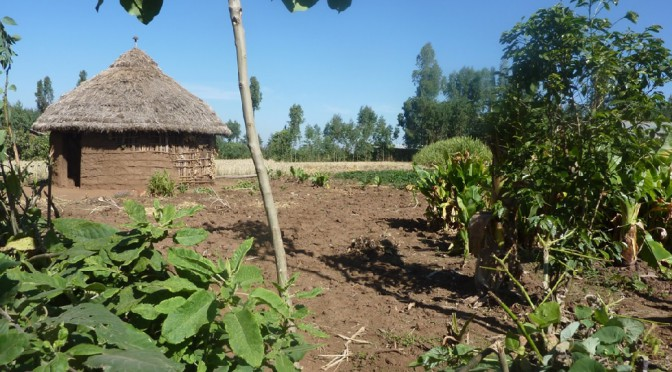Agricultural extension in Wolayta (Ethiopia)