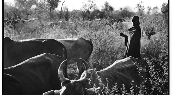 People and cattle in Mursi land