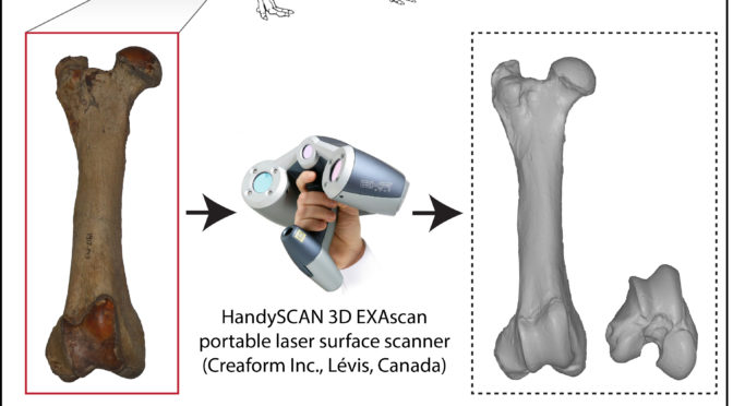 CFEE JOINT SEMINAR: Evolution of semiaquatic hippopotamoids postcranial skeleton